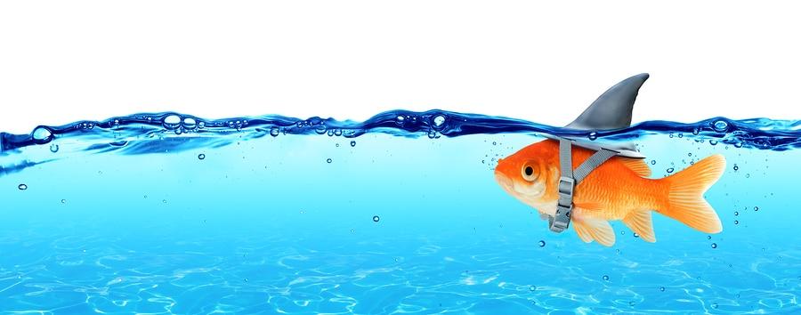 deceptive fish
